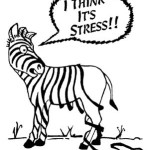 What does a zebra have to do with anything?!?!