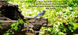 bird with verse
