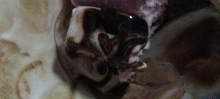 heart ice cream from romania