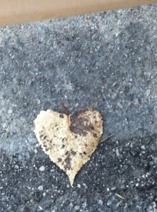 heart leaf again