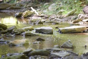 carter caves creek pic two