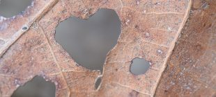 leaf heart edited
