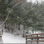Snowy Birthday…….