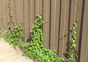 hearts on fence